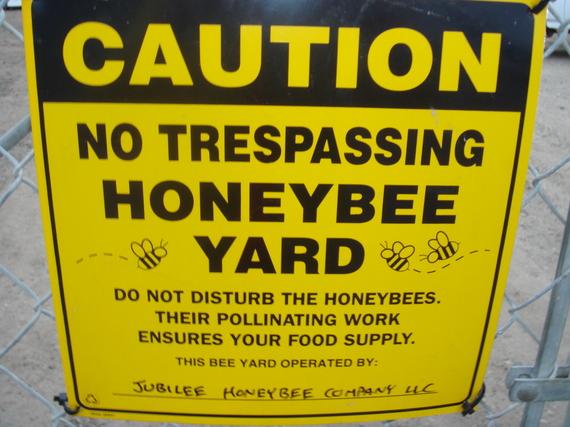 2014-01-15-HoneybeesEarthDrReeseHalter.JPG