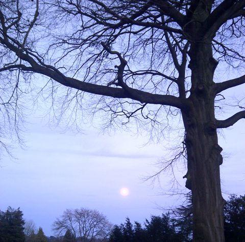 2014-01-16-Skywithtreeandmoon.jpg