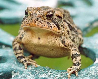 2014-01-16-frowny_frog_main.jpg