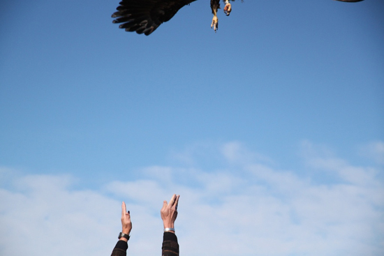2014-01-17-eagle1.jpg