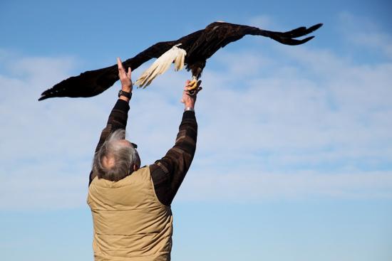 2014-01-17-eagle10.jpg