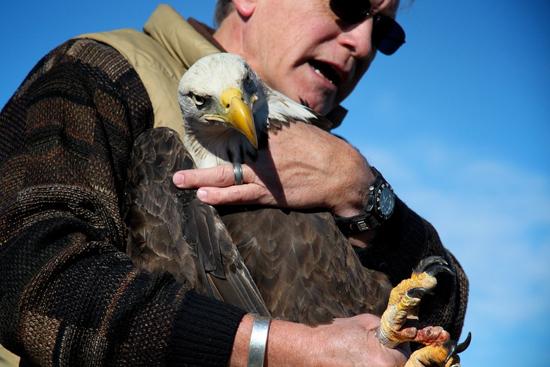 2014-01-17-eagle8.jpg