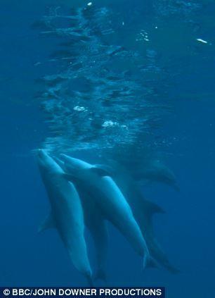 2014-01-19-BottelnosedolphinspufferfishEarthDrReeseHalter