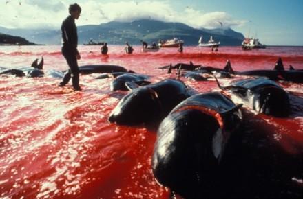 2014-01-19-DolphinSlaughterTaijiEarthDrReeseHalter