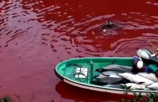2014-01-19-TaijiBottlenosedolphinslaughterEarthDrReeseHalter