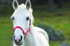 2014-01-21-horse.jpg