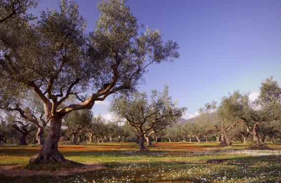 2014-01-21-olivegrove.jpg