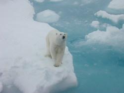 2014-01-23-PolarBearCrane.JPG