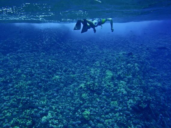 2014-01-23-Snorkeling.jpg