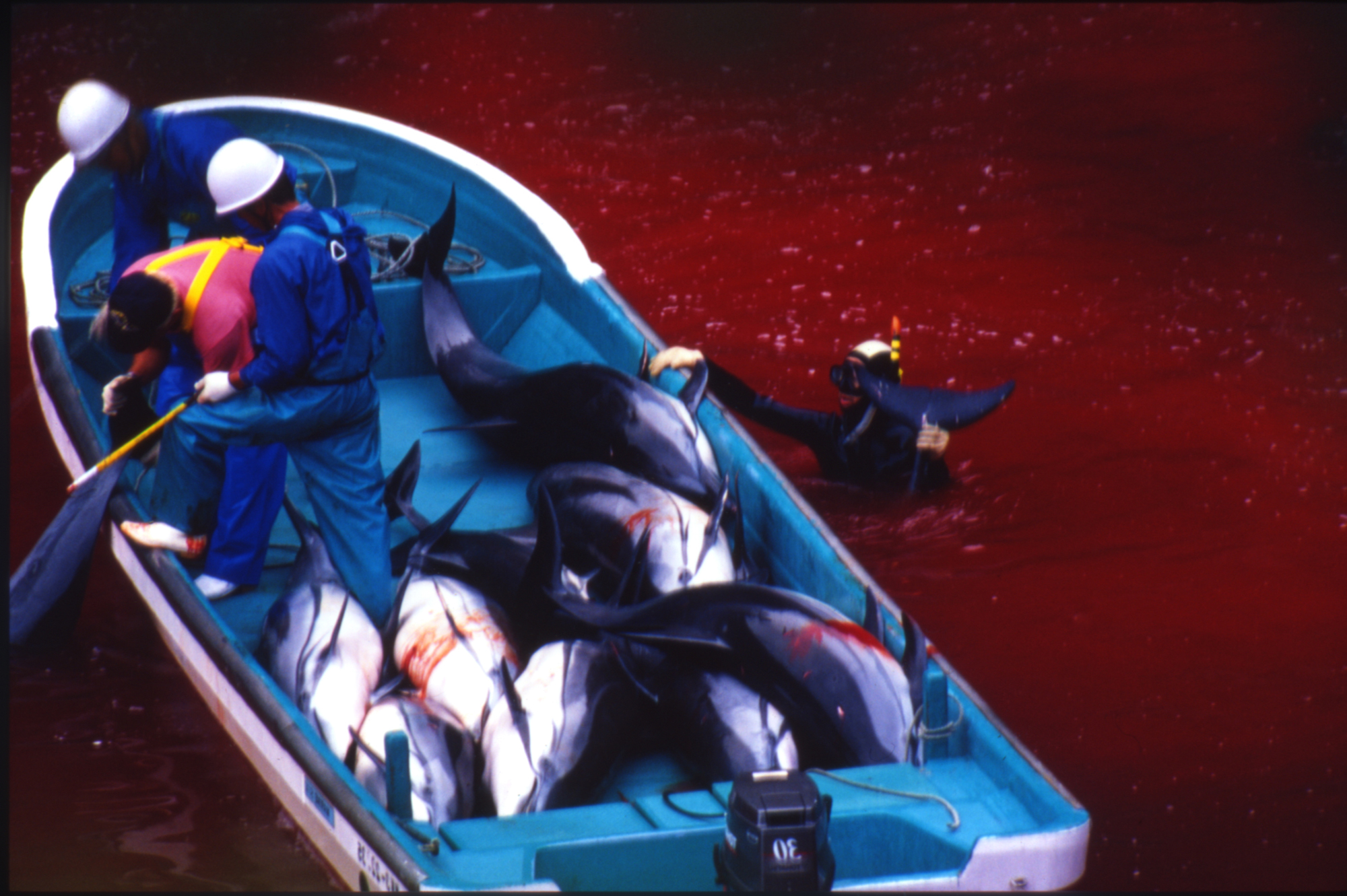 Taiji Japan  city photo : Is Japan's Dolphin Slaughter Really for Food | The Huffington Post