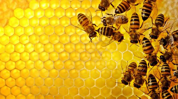 2014-01-26-BeesonHoneycombEarthDrReeseHalter