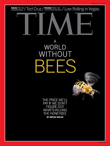 Australian Honeybees Unable To Make Honey Huffpost