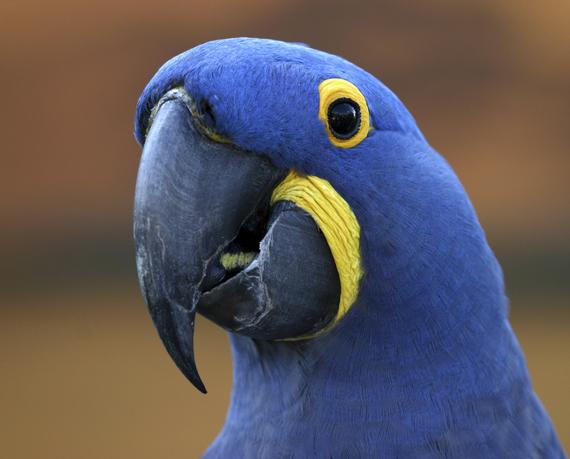 2014-01-26-iStock_Macaw300dpiMedium.jpg