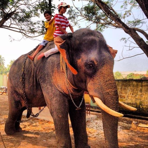 2014-01-27-elephant.jpg