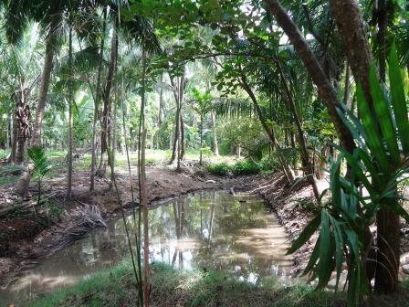 2014-01-29-forest.JPG