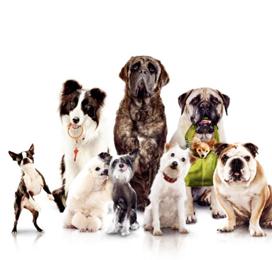 2014-01-29-pups.png