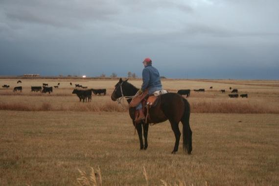 2014-01-30-Dirk_horse.jpg