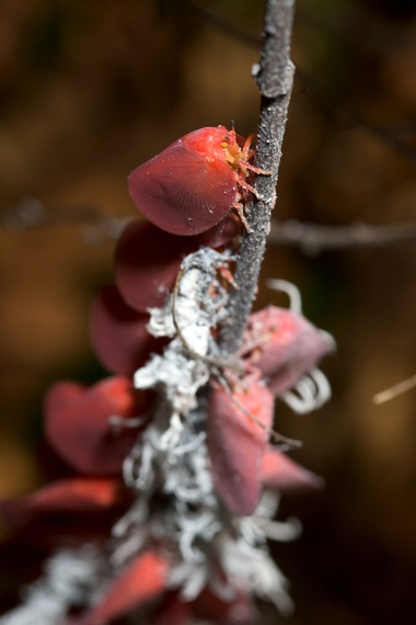 2014-01-31-Leafflatidbug_TravisSteffens4.jpg