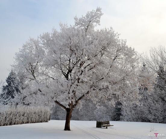 2014-02-01-WinterBluesC.JPG