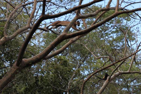 2014-02-04-Cougar2.jpg