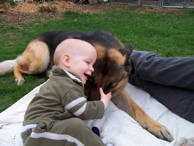 2014-02-04-GSD_and_a_baby.jpg