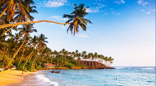 2014-02-07-dotw.uk.srilanka.112513.jpg