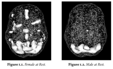 2014-02-12-femal_malebrains.jpg