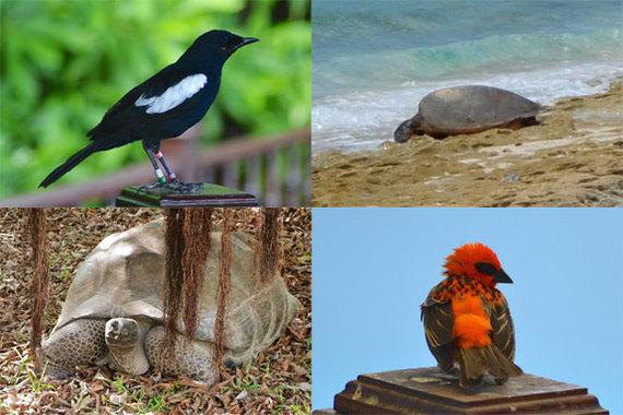 2014-02-13-animals.jpg