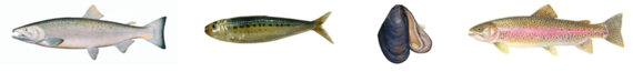 2014-02-13-sustainablefish.png