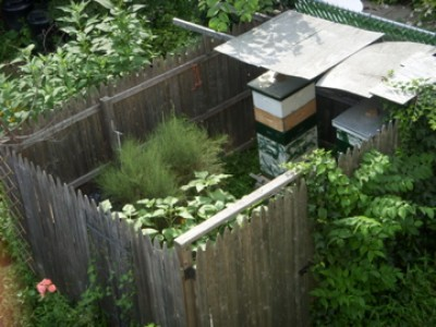 healthy backyard honeybee hives are of great value and importance in