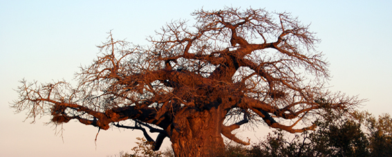 2014-02-16-baobabhuff.jpg