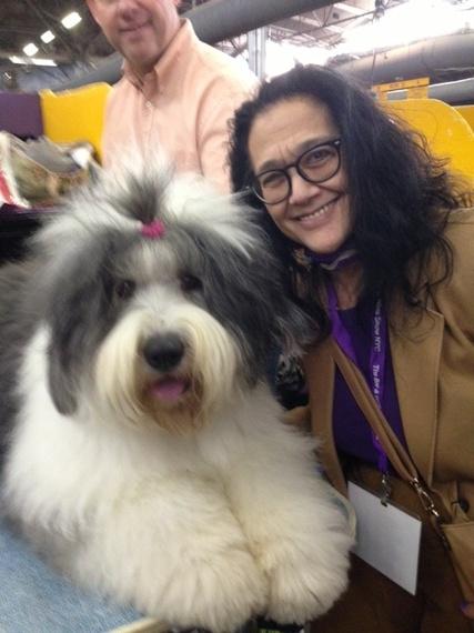 2014-02-24-Sheepdog3Westminster2.10.14.jpg