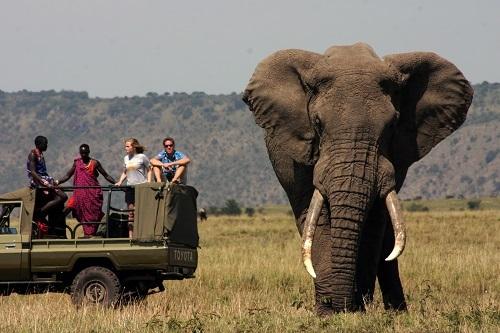 2014-02-26-ElephantBullSerianMara_Resize.jpg