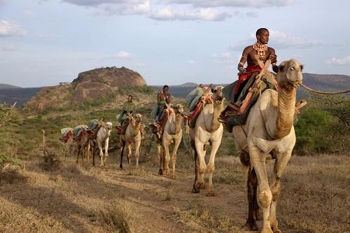 2014-02-26-OlMalo_Camels_Resize.jpg