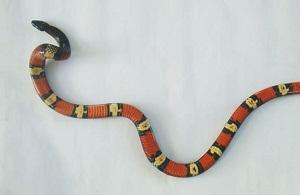 2014-02-26-serpiente.jpg