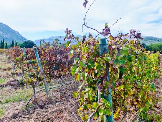2014-02-28-Vines.jpg