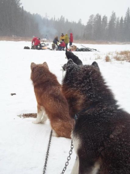2014-03-03-dogswatch.jpg