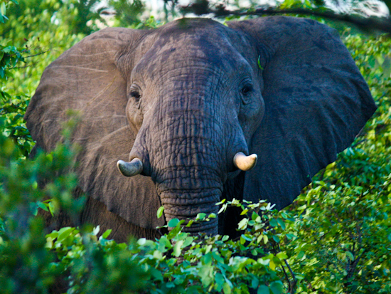 2014-03-04-Elephant.jpg