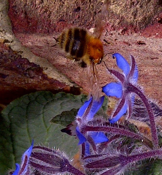 2014-03-06-Bee1.jpg