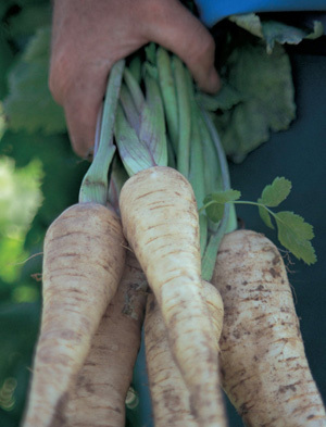 2014-03-06-FarmersMarket_Parsnips_small.jpg