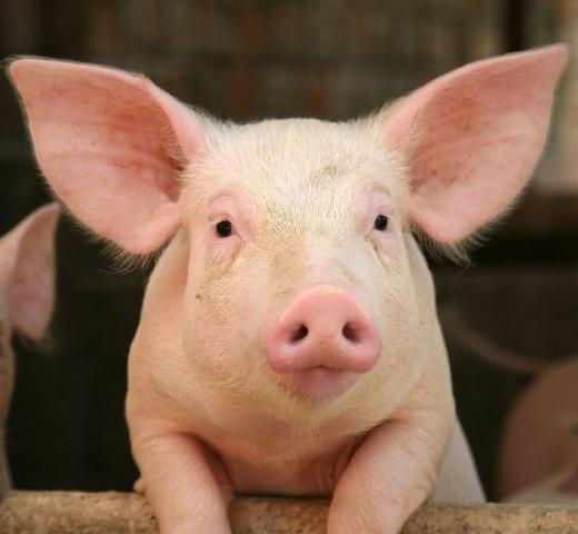 2014-03-06-Pig2.jpg