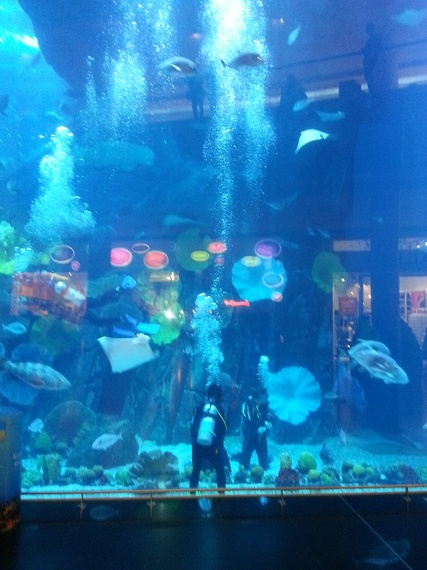 2014-03-07-AquariumMall.jpg