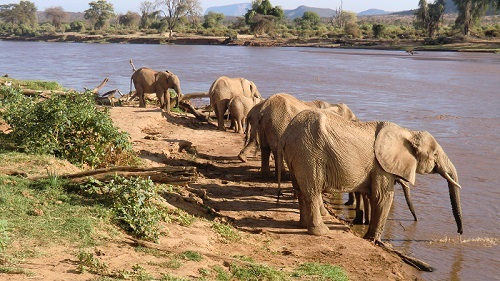 2014-03-10-AfricanelesdrinkingfromriverinSamburNationalPark_LR.jpg