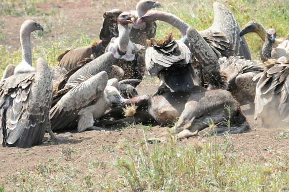 A Kettle of Vultures in a Poisonous Mix