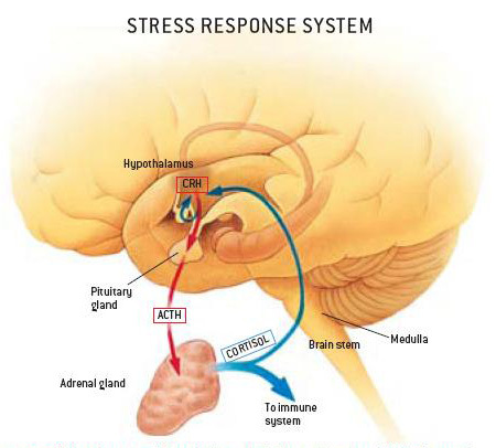 2014-03-11-stressresponse.jpg