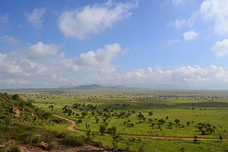 2014-03-12-SavannaByCTCooperWikipedia.jpg