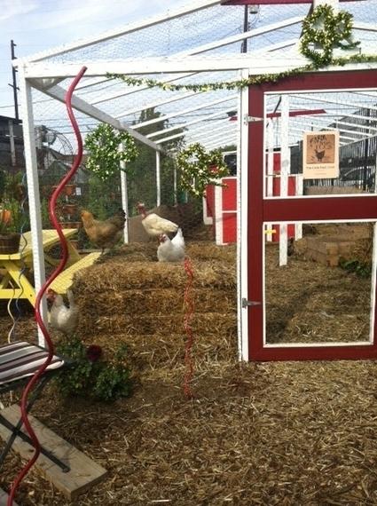 2014-03-12-chickens.JPG