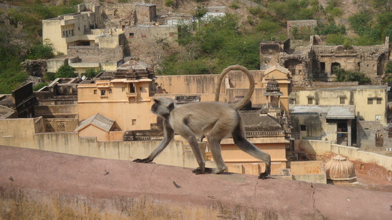 2014-03-12-monkeyamberfortjaipur.jpg