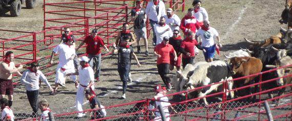 Great Bull Run
