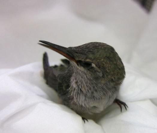 2014-03-18-hummingbird7_light.jpg
